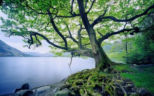A tree planted by steams of water.