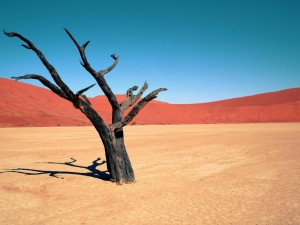 A tree in the desert.